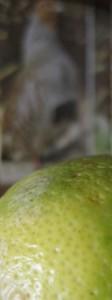 zitrone-huhn