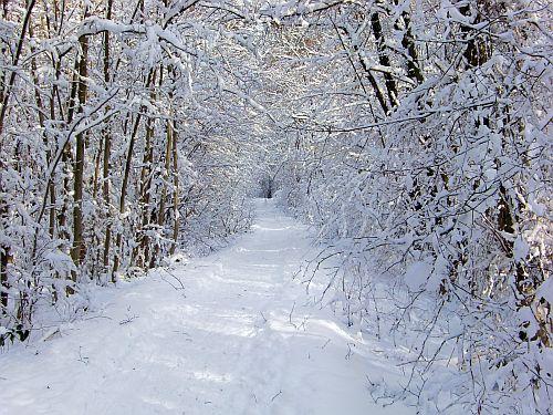 verschneiter Wanderweg im Taunus
