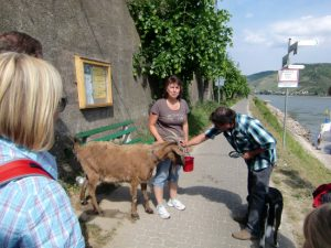 Ziegenwanderung mit Ziegenbock Felix